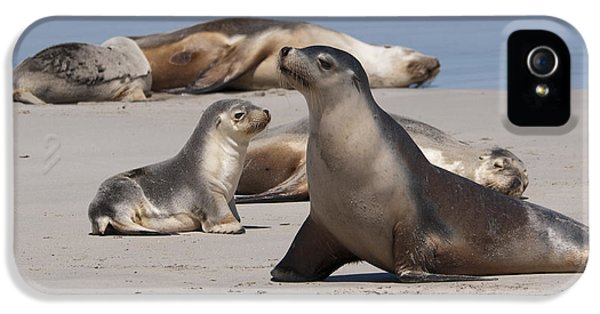 IPhone 5s Case featuring the photograph Sea Lions by Werner Padarin
