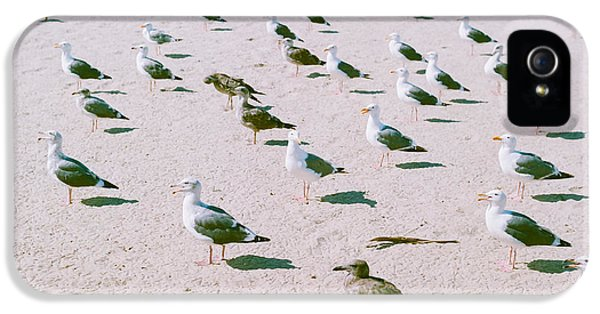Seagulls  IPhone 5s Case by Ariane Moshayedi