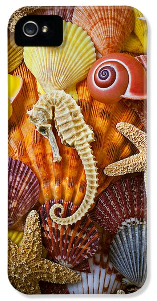 Seahorse iPhone 5s Case - Seahorse And Assorted Sea Shells by Garry Gay