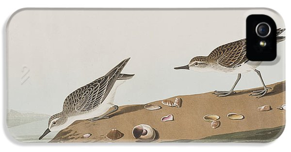 Semipalmated Sandpiper IPhone 5s Case by John James Audubon