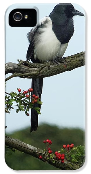 September Magpie IPhone 5s Case