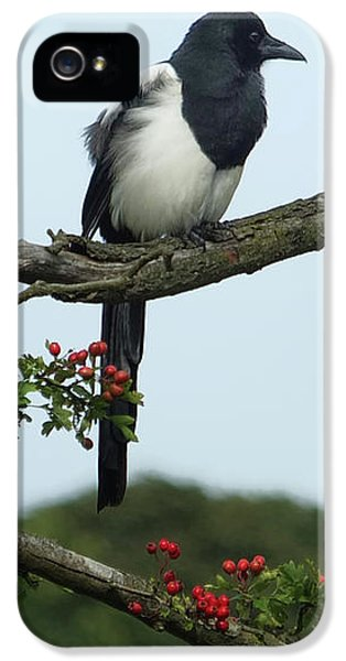 September Magpie IPhone 5s Case by Philip Openshaw