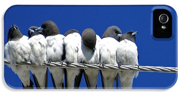Swallow iPhone 5s Case - Seven Swallows Sitting by Holly Kempe