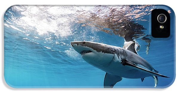 Shark Rays IPhone 5s Case by Shane Linke