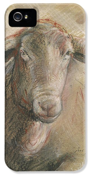 Sheep iPhone 5s Case - Sheep Head by Juan Bosco