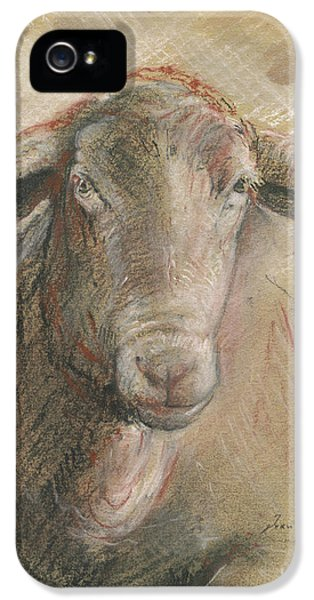 Sheep iPhone 5s Case - Sheep Head by Juan Bosco