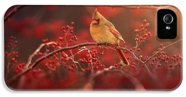Cardinal iPhone 5s Case - Simple Beauty by Rob Blair