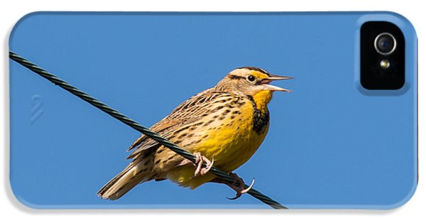 Meadowlark iPhone 5s Case - Singing On The Wire by Jurgen Lorenzen