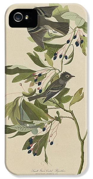 Flycatcher iPhone 5s Case - Small Green-crested Flycatcher by Dreyer Wildlife Print Collections
