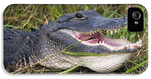 Alligator iPhone 5s Case - Smile by Mike Dawson