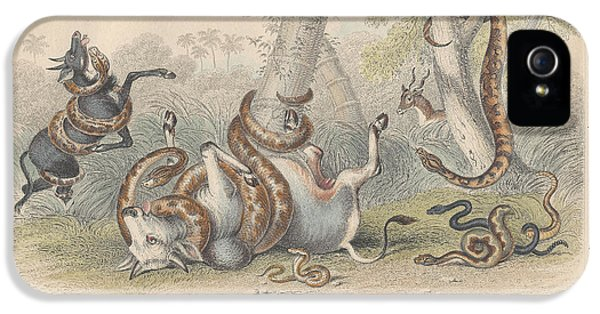 Snakes IPhone 5s Case by Rob Dreyer