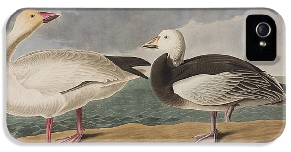 Snow Goose IPhone 5s Case