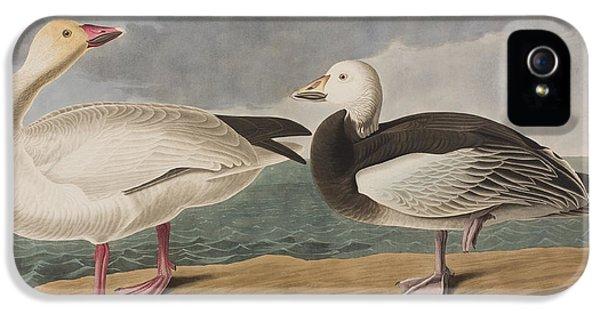 Snow Goose IPhone 5s Case by John James Audubon
