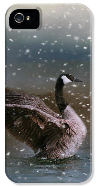 Snowy Swim IPhone 5s Case by Jai Johnson
