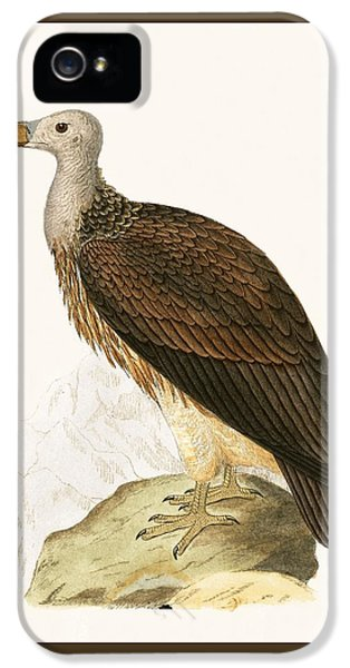 Sociable Vulture IPhone 5s Case by English School