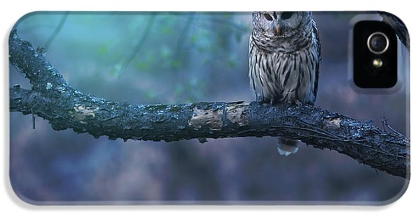 Owl iPhone 5s Case - Solitude - Square by Rob Blair