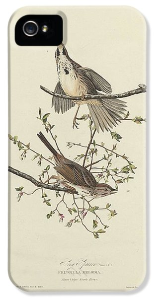 Song Sparrow IPhone 5s Case by Rob Dreyer