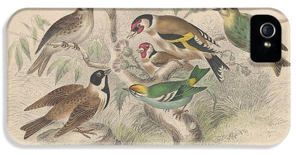 Songbirds IPhone 5s Case