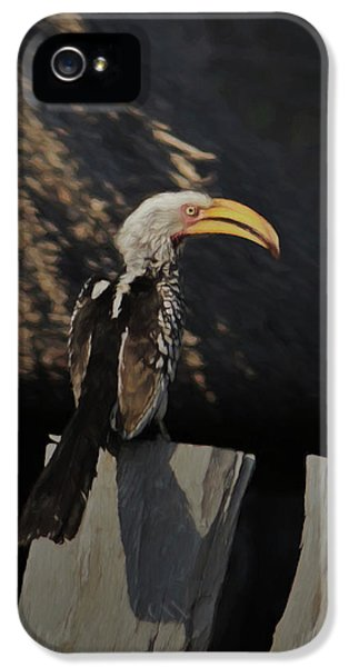 Southern Yellow Billed Hornbill IPhone 5s Case