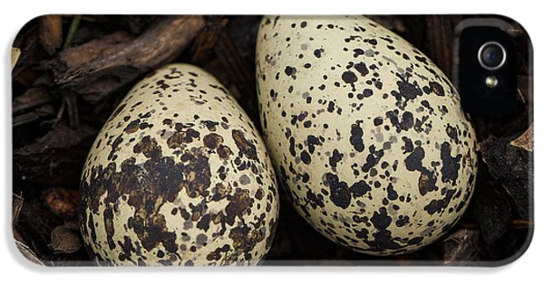 Speckled Killdeer Eggs By Jean Noren IPhone 5s Case