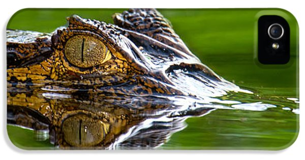 Crocodile iPhone 5s Case - Spectacled Caiman Caiman Crocodilus by Panoramic Images