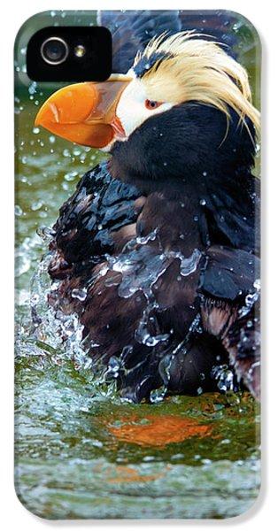 Splish Splash IPhone 5s Case