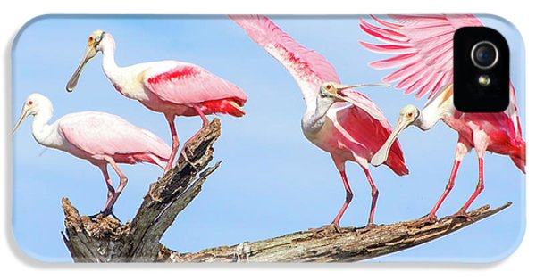 Spoonbill Party IPhone 5s Case by Mark Andrew Thomas
