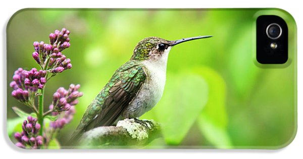 Spring Beauty Ruby Throat Hummingbird IPhone 5s Case
