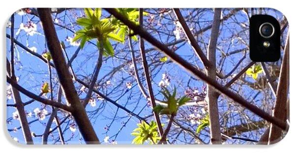Sky iPhone 5s Case - Spring Leaves #seasons #trees by Shari Warren