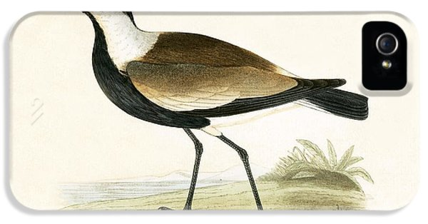 Spur Winged Plover IPhone 5s Case by English School