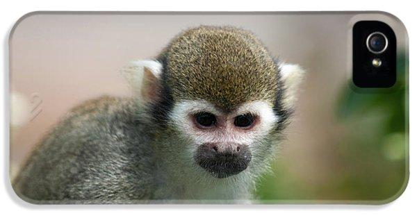 Squirrel Monkey IPhone 5s Case by Amanda Elwell