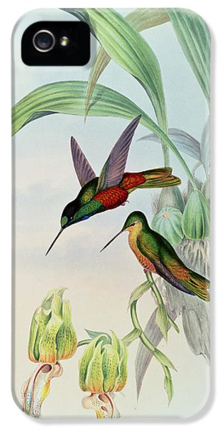 Humming Bird iPhone 5s Case - Star Fronted Hummingbird by John Gould
