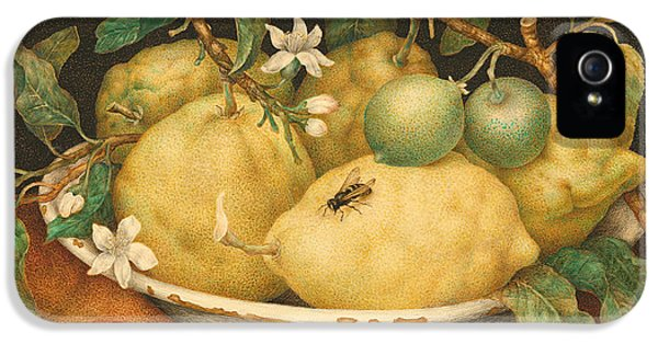 Still Life With A Bowl Of Citrons IPhone 5s Case by Giovanna Garzoni