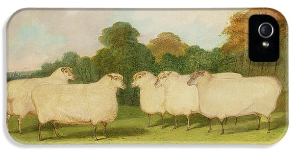 Sheep iPhone 5s Case - Study Of Sheep In A Landscape   by Richard Whitford