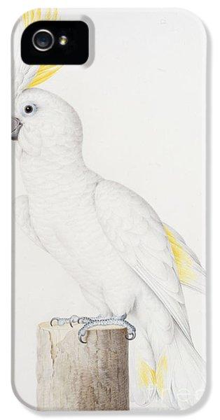 Sulphur Crested Cockatoo IPhone 5s Case