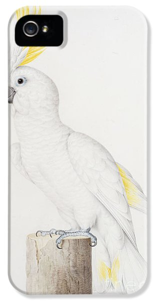 Sulphur Crested Cockatoo IPhone 5s Case by Nicolas Robert
