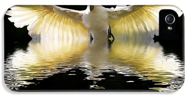 Cockatoo iPhone 5s Case - Sulphur Crested Cockatoo Rising by Sheila Smart Fine Art Photography