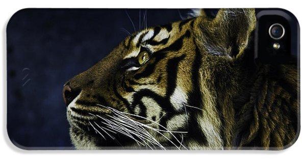 Sumatran Tiger Profile IPhone 5s Case