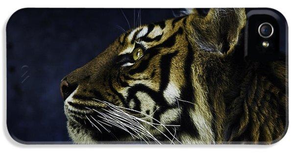 Sumatran Tiger Profile IPhone 5s Case by Avalon Fine Art Photography