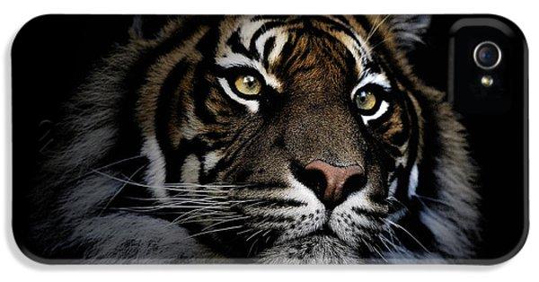 Sumatran Tiger IPhone 5s Case by Avalon Fine Art Photography