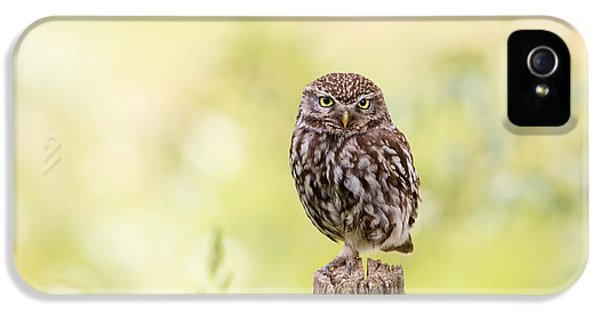 Sunken In Thoughts - Staring Little Owl IPhone 5s Case by Roeselien Raimond