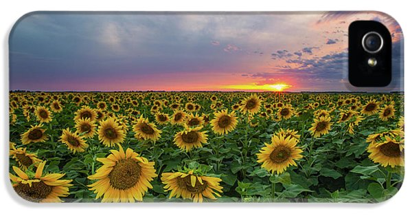 Sonny iPhone 5s Case - Sunny Disposition  by Aaron J Groen