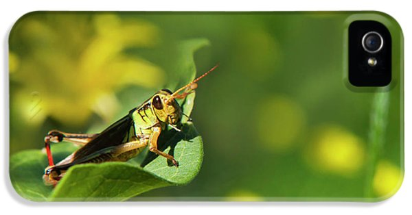 Green Grasshopper IPhone 5s Case by Christina Rollo