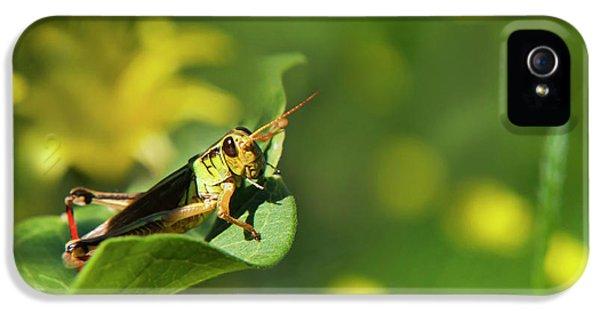 Green Grasshopper IPhone 5s Case by Christina Rollo