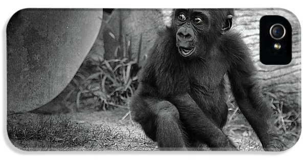 Gorilla iPhone 5s Case - Surprise by Larry Marshall
