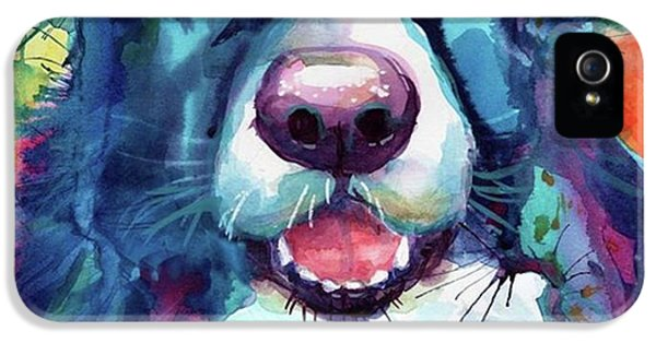 iPhone 5s Case - Surprised Border Collie Watercolor by Svetlana Novikova