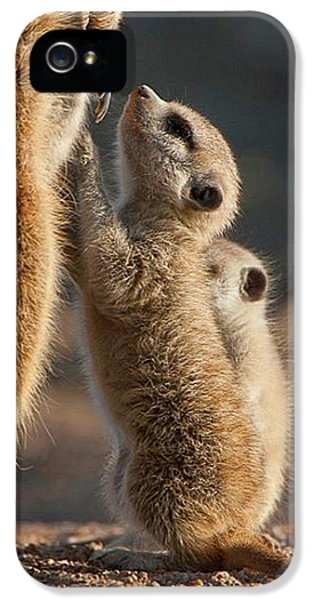 The Baby Is Hungry IPhone 5s Case by Happy Home Artistry