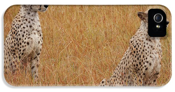 Cheetah iPhone 5s Case - The Cheetahs by Smart Aviation