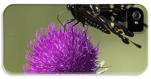 The Eastern Black Swallowtail  IPhone 5s Case by Ricky L Jones