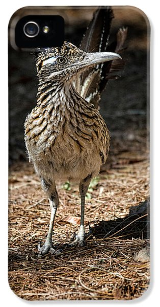 The Greater Roadrunner Walk  IPhone 5s Case